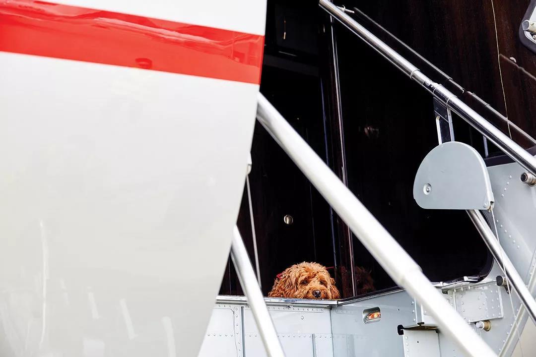 宠物抵达目的地- 维思达公务机