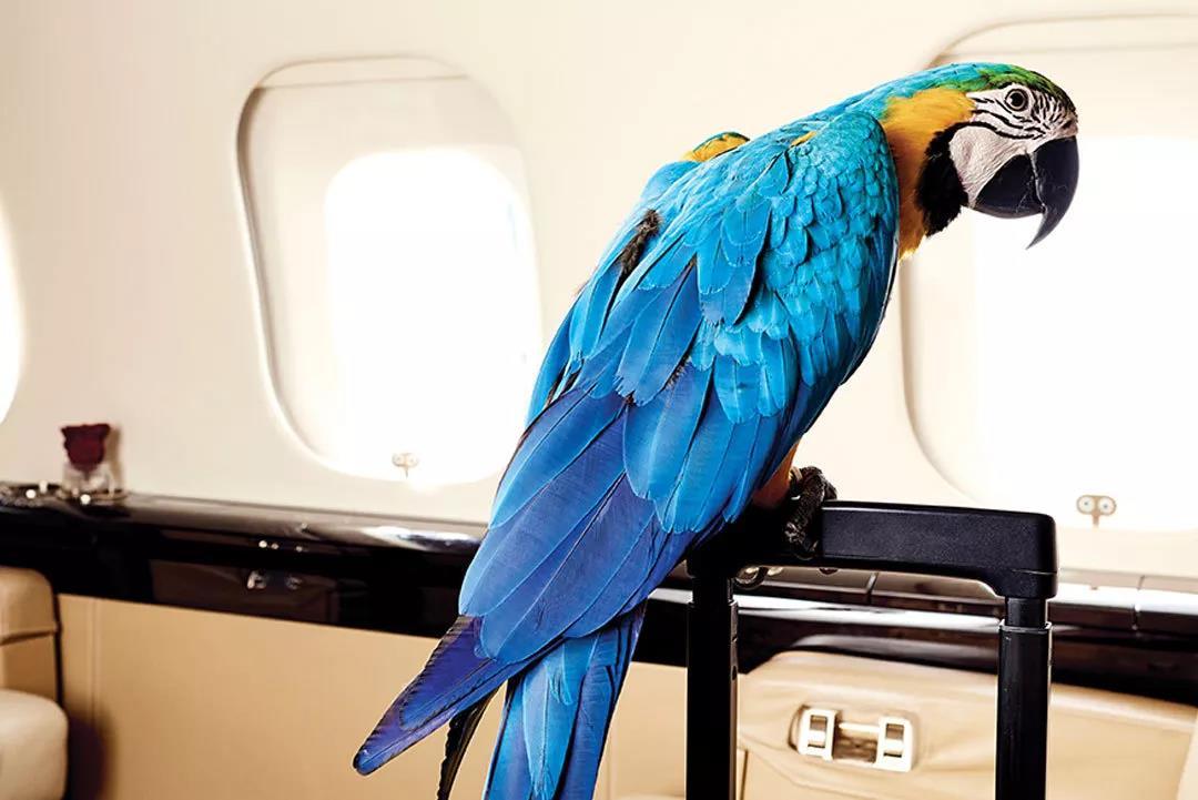 宠物飞行计划- 维思达公务机