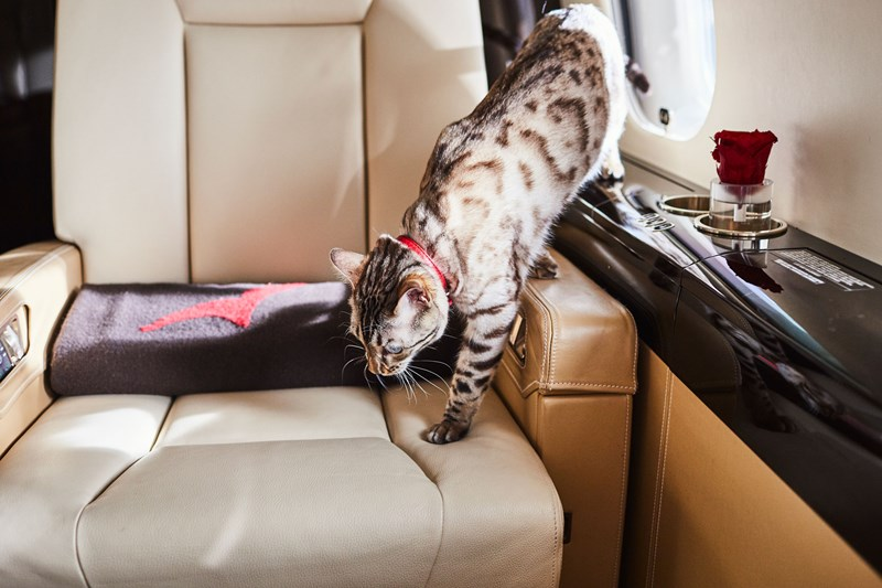VistaJet, private jet with cat onboard