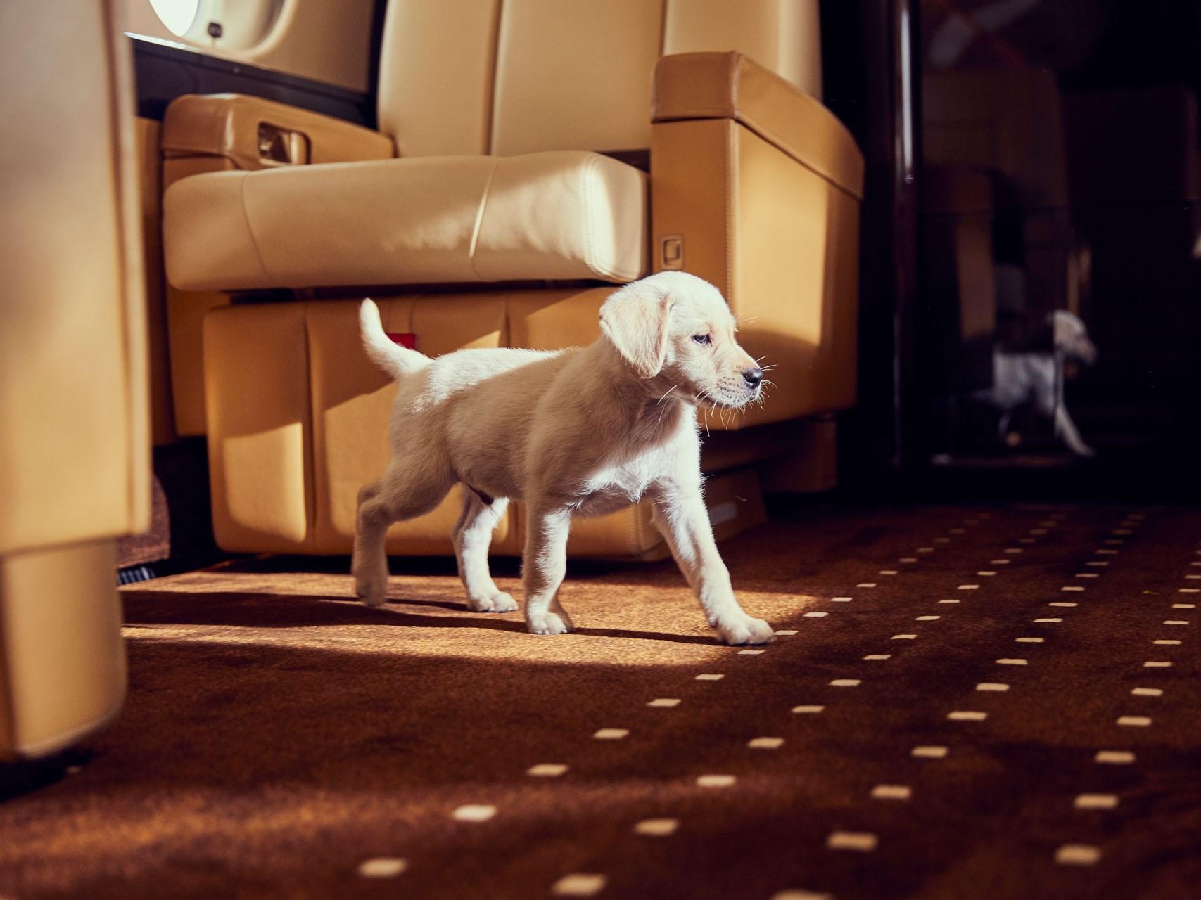 VistaJet, dog on board private jet