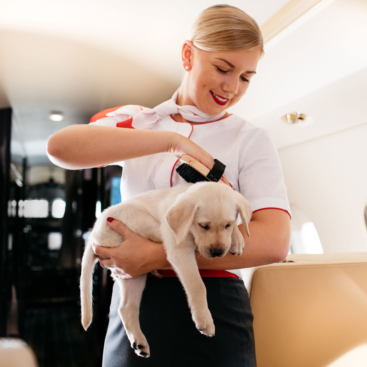 VistaJet dog on board private jet