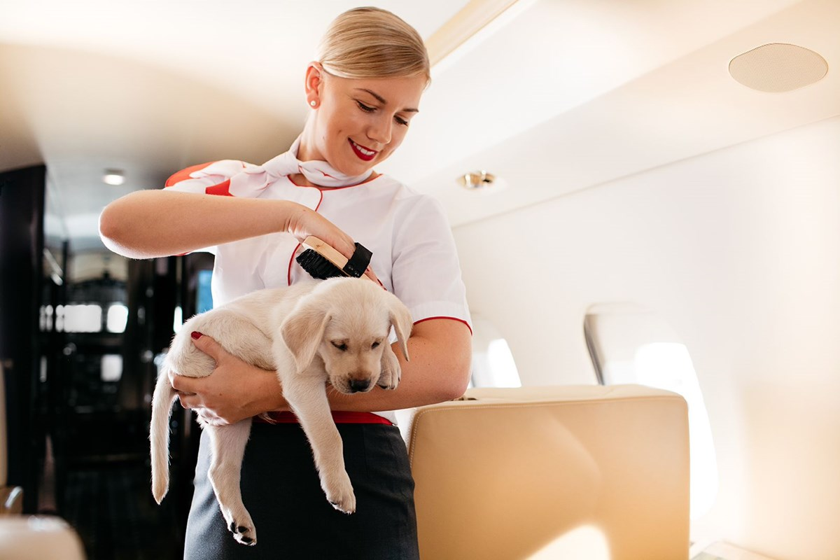 travel-hacks-how-to-fly-with-pets