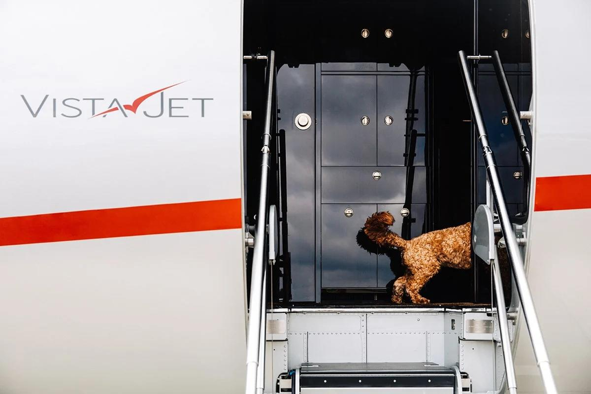 Brexit: New travel rules for pets in Great Britain