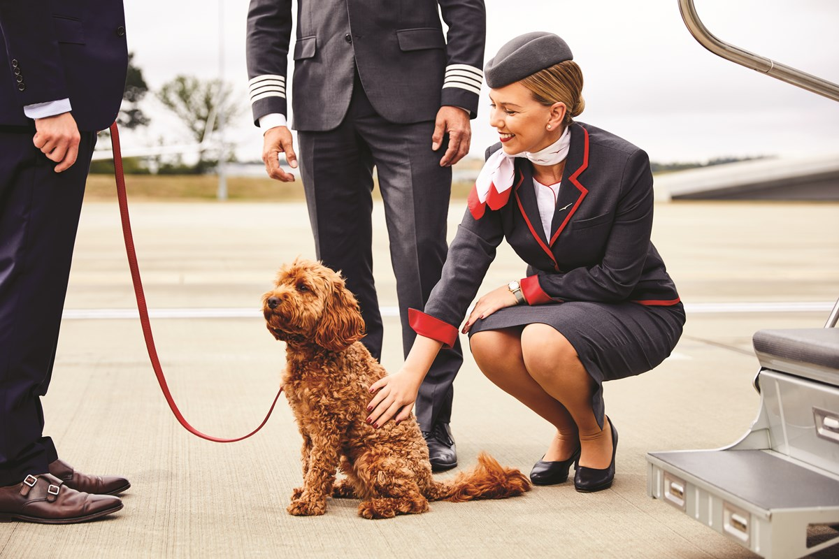 in-flight-pet-care-the-new-standard